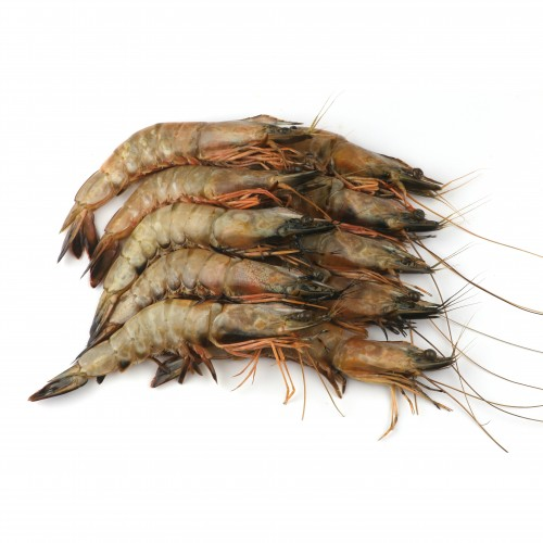 Black Tiger Prawn 16/20