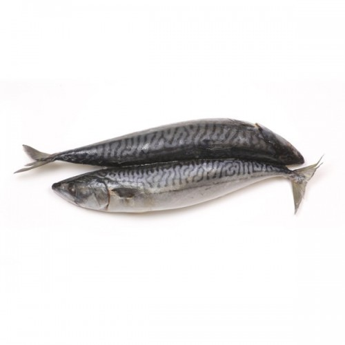 Saba Mackerel (Whole)