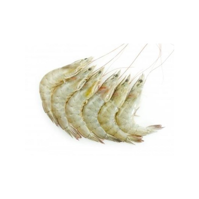 Frozen White Prawn (21/25)