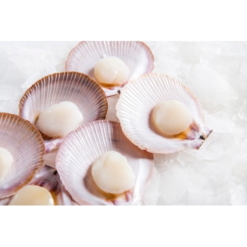 Half Shell Scallops (12pc)