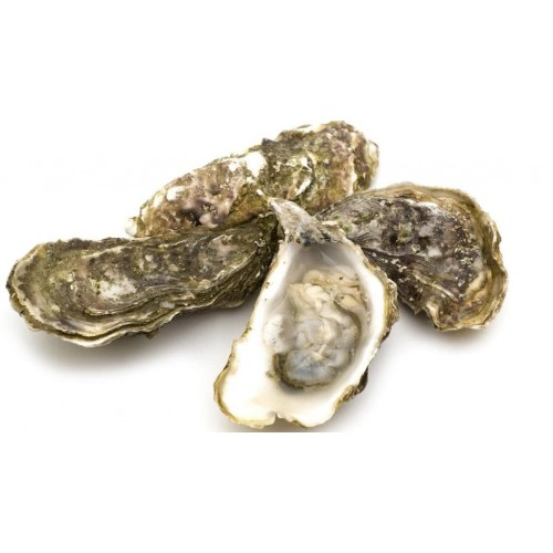 Oysters, Tasmanian (12pc) - Unshucked, Frozen
