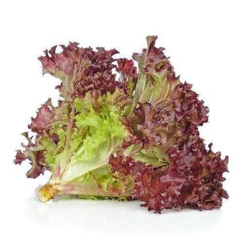 Lettuce Coral, Green
