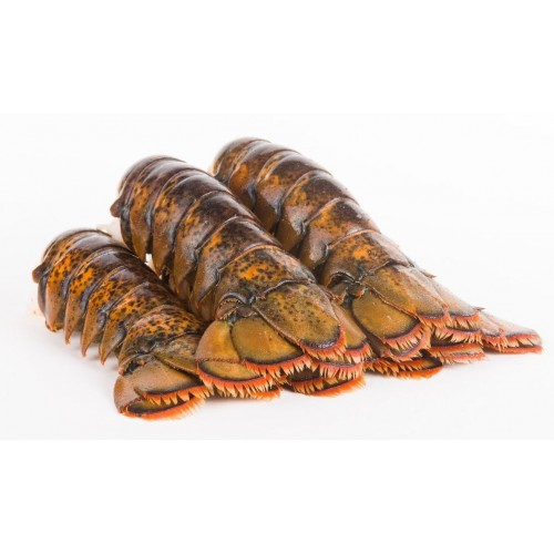 AUS Wild Caught Tropical Rock Lobster Tail (E2) - Single (397-454/pc)