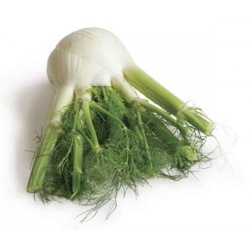 Fennel (1pc)