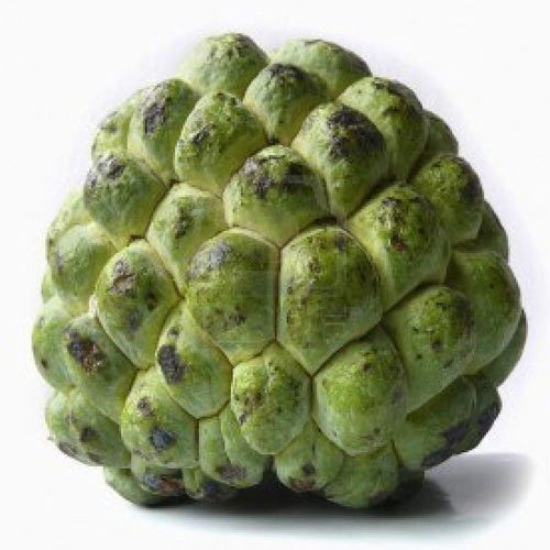 Australian Custard Apple (Single)